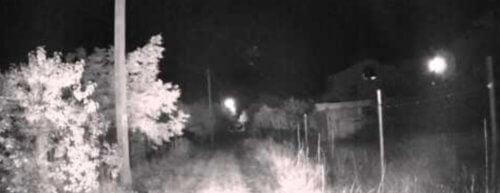 gri görüntü kızılötesi kamera